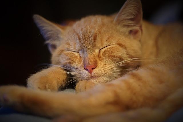 Ha fáradt vagy, aludj!