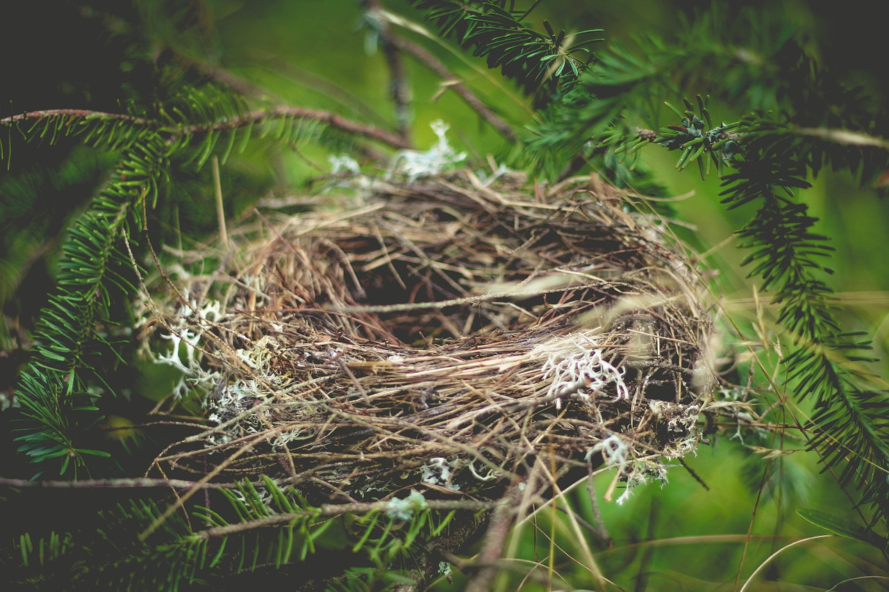 Üres fészek szindróma – alig születik meg, és máris ezzel küzdhetsz