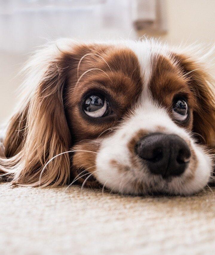 Kutya önbizalom növelése